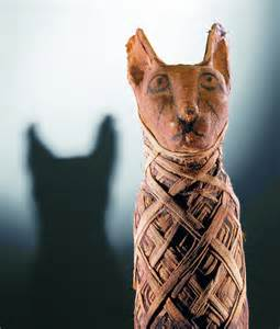 mummy cat history los angeles county mummies of the world at
