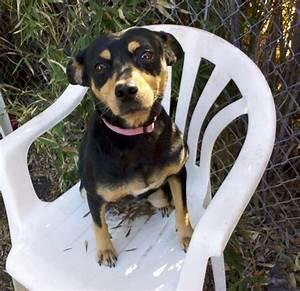 Daisy - Terrier | Humane Society of Dallas County