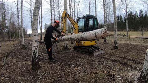 pushing   birch tree  mini excavator  cutting    stihl chainsaw youtube
