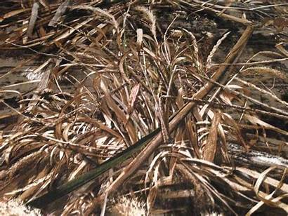 Camo Realtree Max Camouflage Fabric Backgrounds Hunting