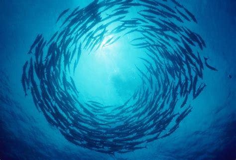 fish storms nourish marine life  tarpon transmit
