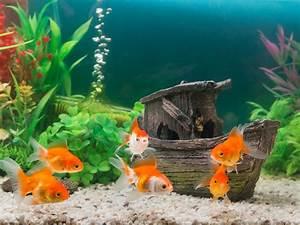 Aquarium Et Calcaire Attention Poissons En Eaux