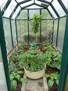 Gurken Pflanzen Gewächshaus : gew chshaus frisch bepflanzt mit tomaten und vereldelten mini gurken gew chshaus garten ~ Pilothousefishingboats.com Haus und Dekorationen
