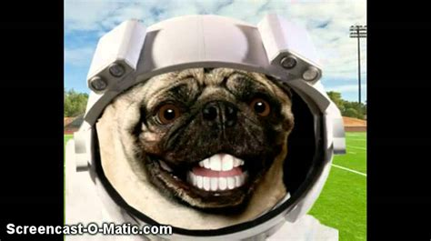 Funny Dogs With Teeth YouTube