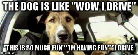 Asian Dog Meme - asian dog meme bodybuilding com forums
