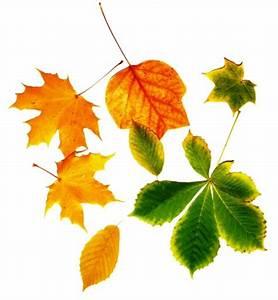 Bilder Herbst Kostenlos : bunte bl tter herbst 1 lizenzfreie fotos bilder kostenlos herunterladen ohne anmeldung ~ Somuchworld.com Haus und Dekorationen