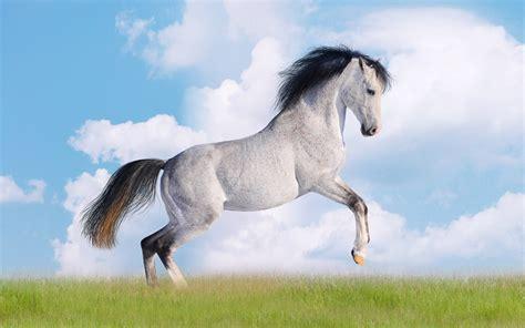 die  besten schoene pferde hintergrundbilder