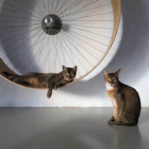 cat hamster wheel cats and bicycles well spoke n