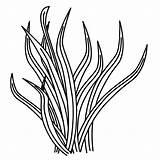 Seaweed K5worksheets Moziru sketch template