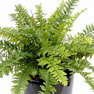 Plante D Extérieur En Pot : plante verte artificielle artificielflower ~ Teatrodelosmanantiales.com Idées de Décoration