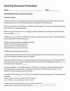 Bestseller  Fetal Pig Dissection Anatomy Answer Key