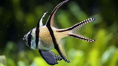 aquarium zoological society  london zsl