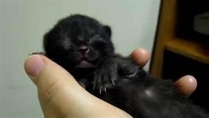 Newborn black kitten sleeping! - YouTube