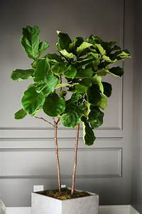 Plant Stand Singular Indoor Corner Pictures Ideas Awesome