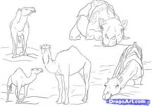 How to Draw Step by Step Camels Desert