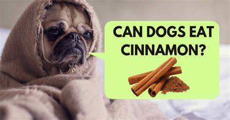 can cats and dogs eat cinnamon