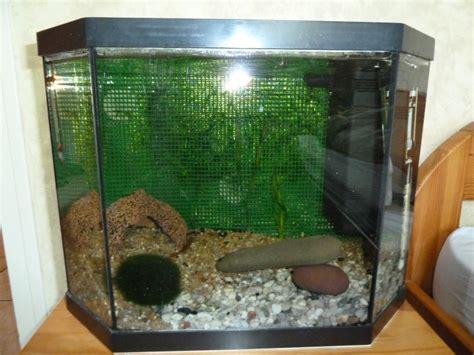aquarium 50l pas cher aquarium 50 litres sp 233 cial crevettes