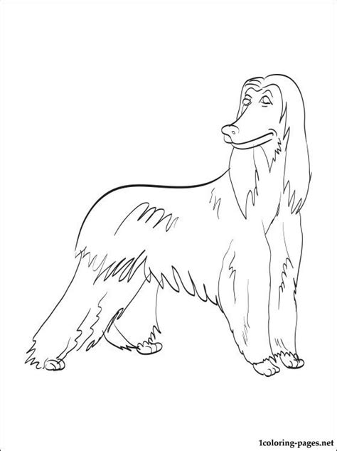 afghan hound coloring page coloring pages