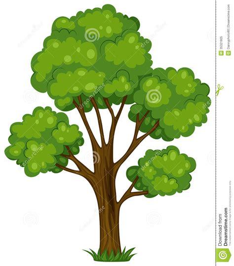 tall tree royalty  stock photo image