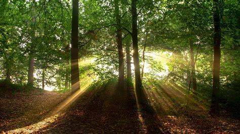 bäume die im winter grün bleiben die 77 besten wald hintergrundbilder