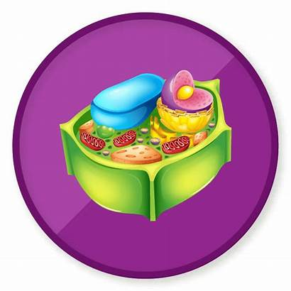 Cell Plant Clipart Clipartmag
