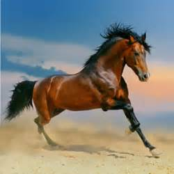 horses in action pictures - Google Search | Horses ...