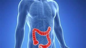 What Are The Symptoms Of Inflammatory Bowel Disease  Ibd