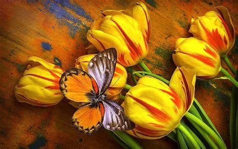 butterfly  yellow tulips widesreen hd wallpaperscom