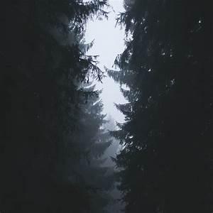 FreeiOS7.com | iPhone wallpaper | ni87-wood-tree-simple-nature