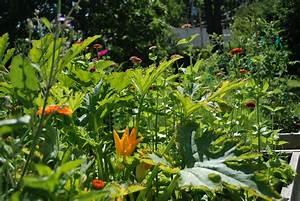 Planter Des Choux Fleurs : potager biologique on a tous un pouce vert ~ Melissatoandfro.com Idées de Décoration