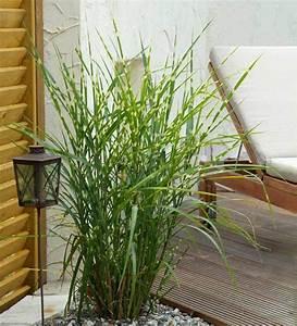 Winterharte Pflanzen Für Balkon : winterharte balkonpflanzen 23 lebendige vorschl ge f r den grauen winter balkon deko ~ Somuchworld.com Haus und Dekorationen