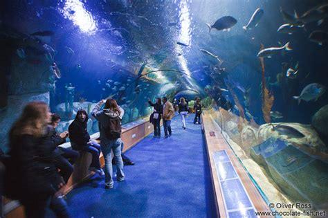 valencia spain aquarium newhairstylesformen2014