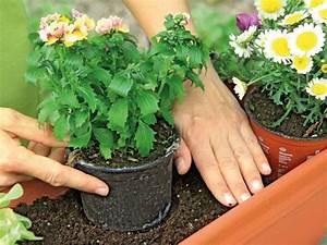 Balkonblumen Richtig Pflanzen : balkonblumen pflanzen 10 tipps balkon terrasse gartenpraxis mein garten ~ Frokenaadalensverden.com Haus und Dekorationen