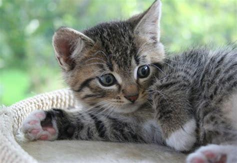 wenn die katze ueberall hin pinkelt meine haustiere