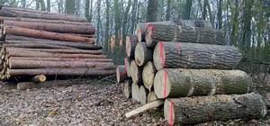 Brennholz Kaufen Polen : kaminholz brennholz und feuerholz aus stettin polen wo kaufen ~ Eleganceandgraceweddings.com Haus und Dekorationen