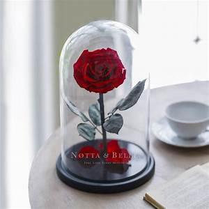 Rose Eternelle Sous Cloche : acheter une rose ternelle rouge king sous cloche notta ~ Farleysfitness.com Idées de Décoration