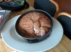 Funny cat rolled in cake tin LuvBat