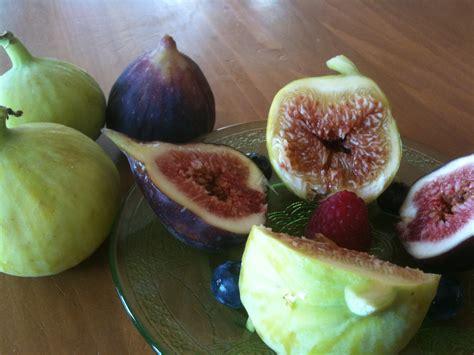 when are figs in season top 28 when are figs in season fig season a few last figs this season ourfigs com top 28