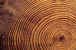 Diagram Of Tree Rings