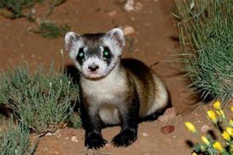 ranking de animales en peligro de extincion listas en