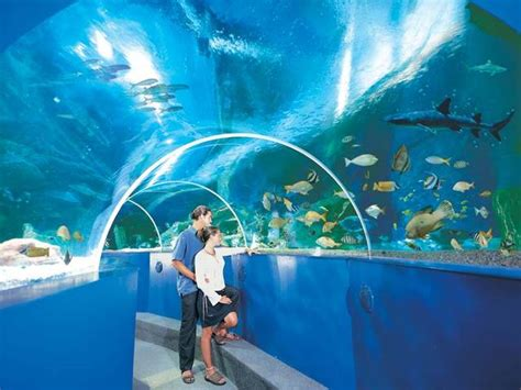 Blue Reef Aquarium, Hastings   Whats' On, Attractions, Within 25 miles   Fairfields Farm