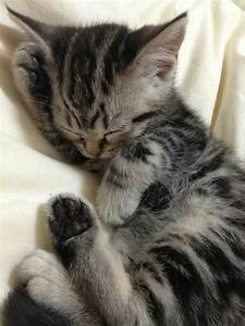 Tabby kitten | Cute kittens | Pinterest | Kittens, Too ...