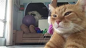 This Rude Cat Ruined Its Owner U0026 39 S Yoga Video  And Now It U0026 39 S Become A Meme