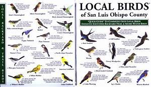 Birds Animals List