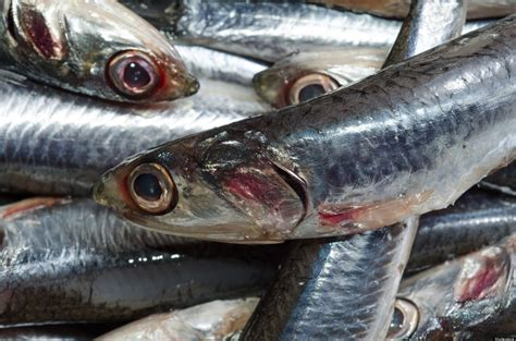high mercury fish   eat safe sustainable seafood