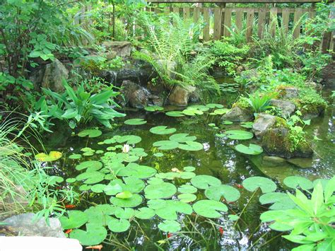 Water Gardeners Use Native Plants To Create A Healthy