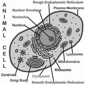 Cell Artwork
