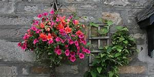 Blumenampeln f r balkon terrasse und garten bepflanzen for Blumenampeln für balkon
