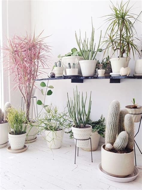 potting succulents indoors 1000 images about not so secret indoor gardens on pinterest plant stands planters and the