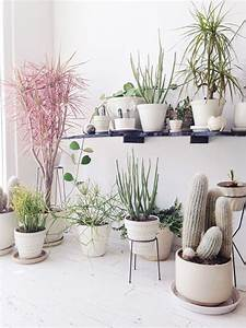 succulents | ...A little greenery..... | Pinterest